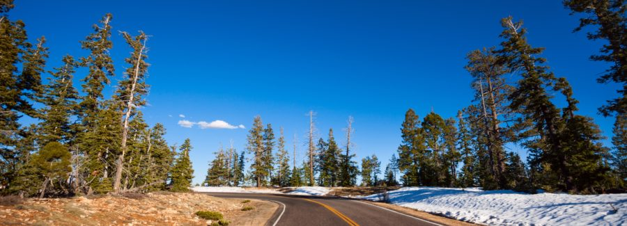 Road in Bruce canyon national park in winter with snow and fir trees, USA